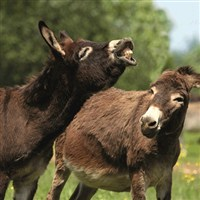 Sidmouth & Donkey Sanctuary WC