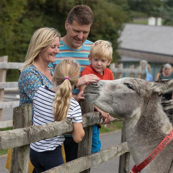 Sidmouth Donkey Sanctuary