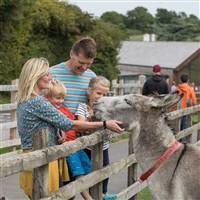 Donkey Sanctuary, Sidmouth - Donkey Week