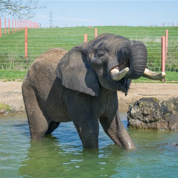 Noahs Ark Zoo, Somerset