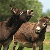 Isle of Wight & Donkey Sanctuary