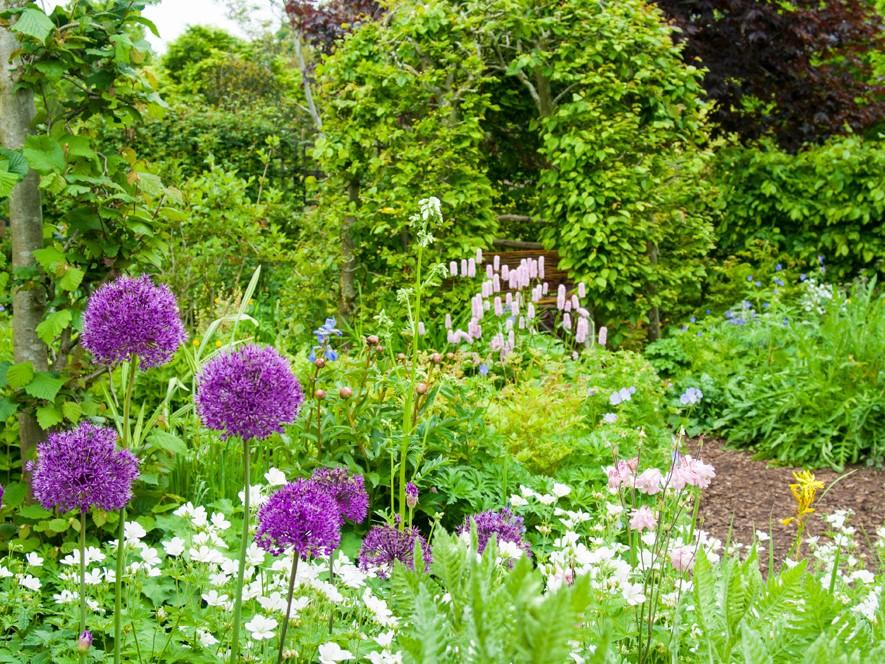 Barnsdale Gardens Aliums