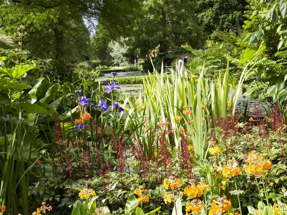 Beth Chatto Water Garden