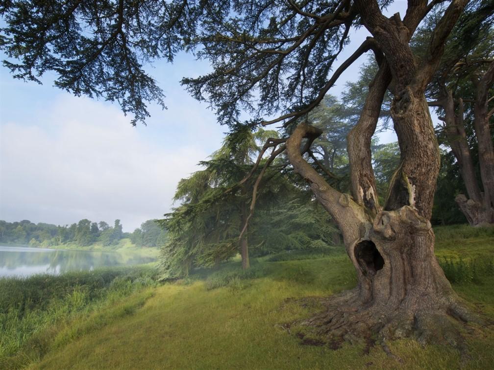 Blenheim Palace Harry Potter Tree