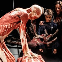 Body Worlds: The Museum Experience