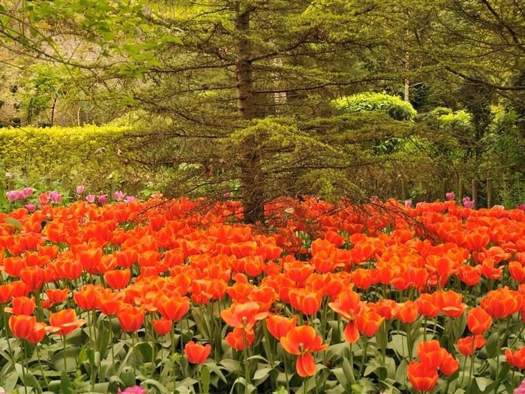 Chateau de Vendeuvre tulipe & ext