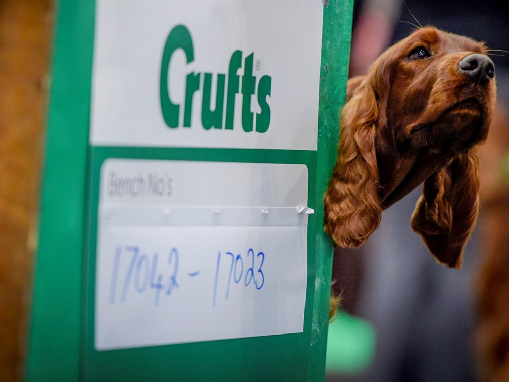 Crufts 2021 General Admission