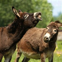 Donkey Sanctuary and Sidmouth - Donkey Week
