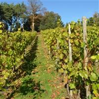 Follies & Vines