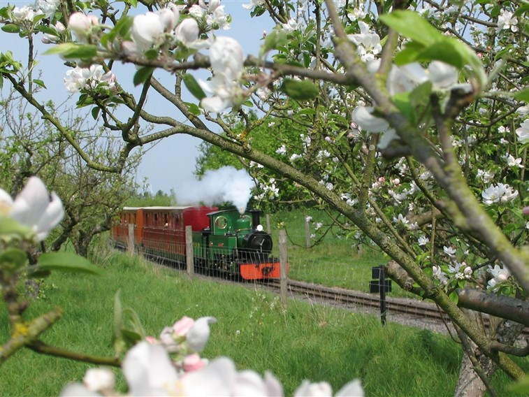 Evesham Blossom & Train