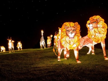 Featival of Light at Longleat