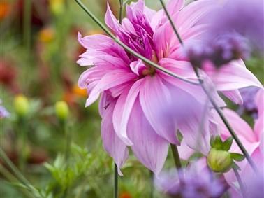 Floriade Flower