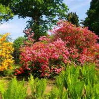 Sir Harold Hillier Gardens & Winchester