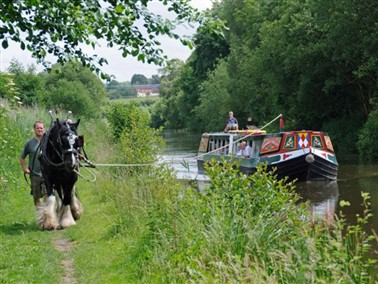 Horse-drawn Barge with Cream Tea & Cake