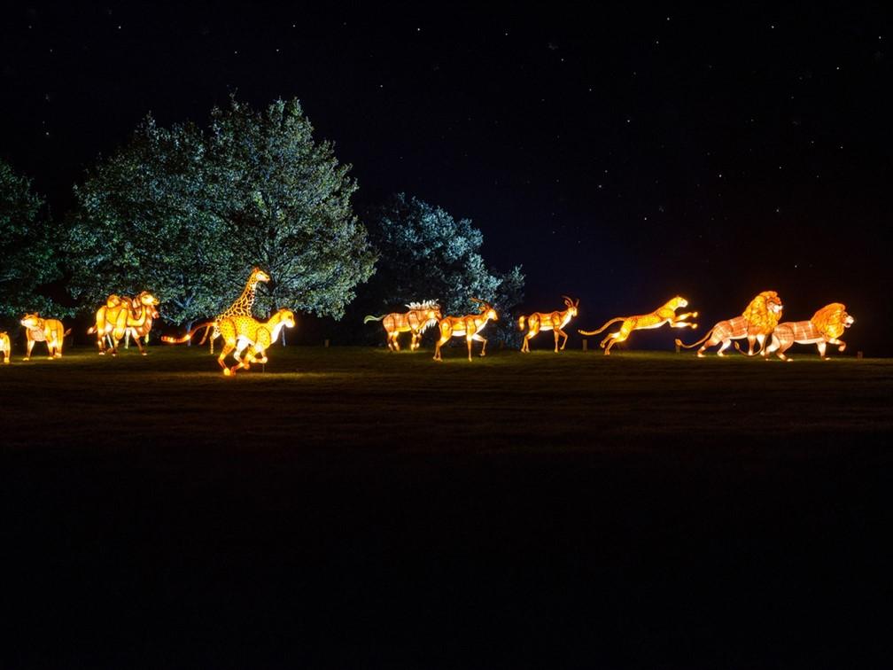 Longleat Lights Lion
