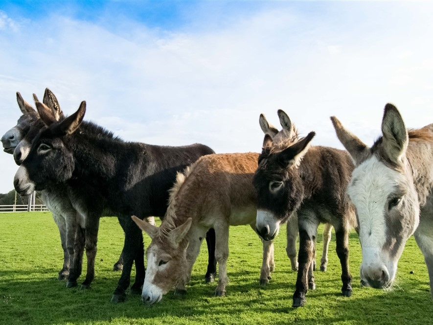 Main Herd
