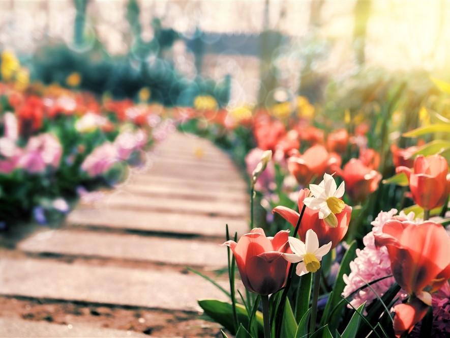 Path & Spring Flowers