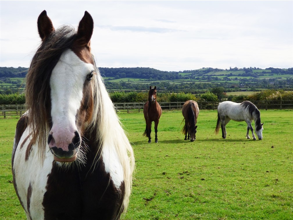 Redwings Horse Sanctuary in Warwickshire