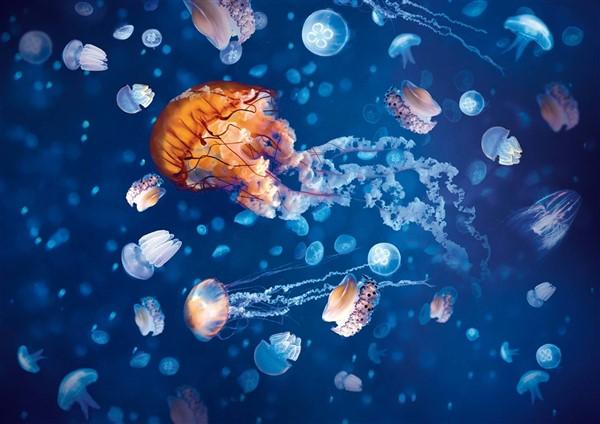 Ocean Invaders