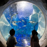 London Day Out: Sea Life, London