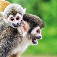 Monkey World (Coach Only Fare)
