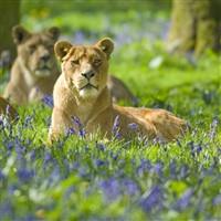 Longleat House & Safari Park