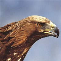 Hawk Conservancy & Carvery