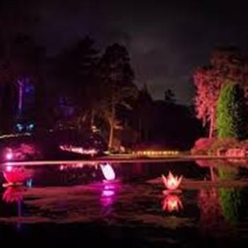 Leonardslee Gardens Illuminations